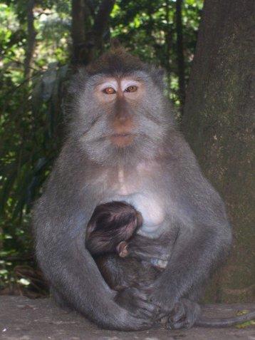 Monkey Tree Forest, Ubud, Bali