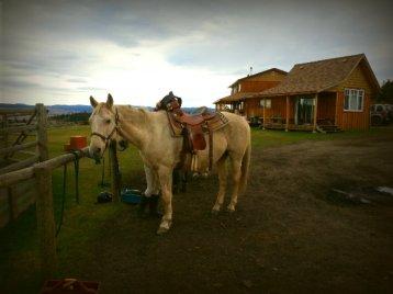 Horse Homestay, British Columbia