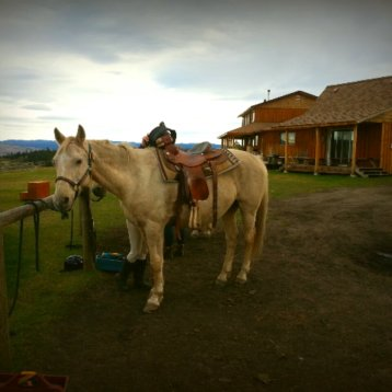 Horse Homestay, British Columbia