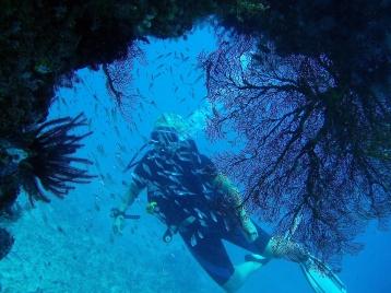 Diving Gili Islands, Indonesia