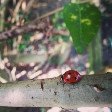 Ladybird, Dorset, UK