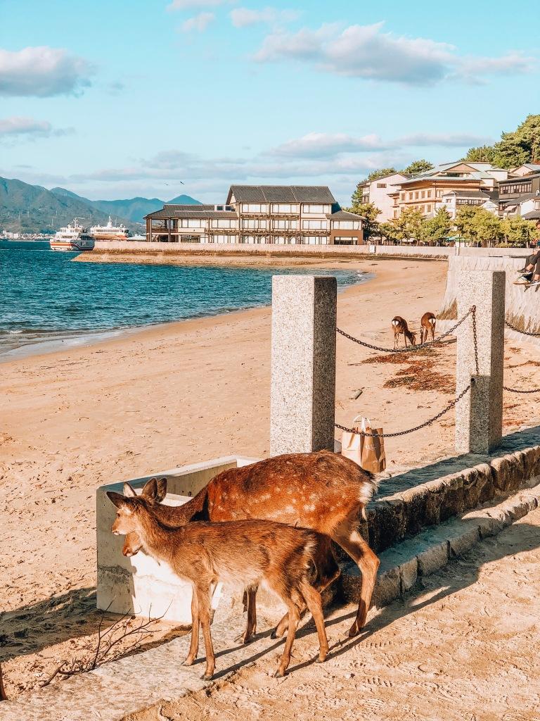 Deers on Miyajima Island